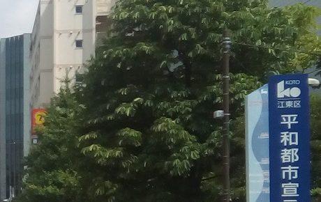 江東区役所前