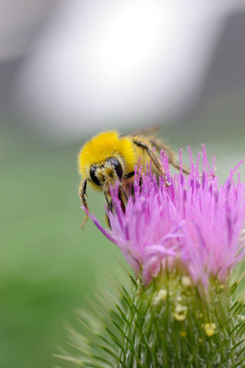 ハチの画像